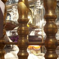 Sotto l'albero di Pipal il buddha ebbe l'illuminazione